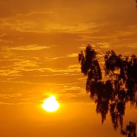 Morning Eucalyptus