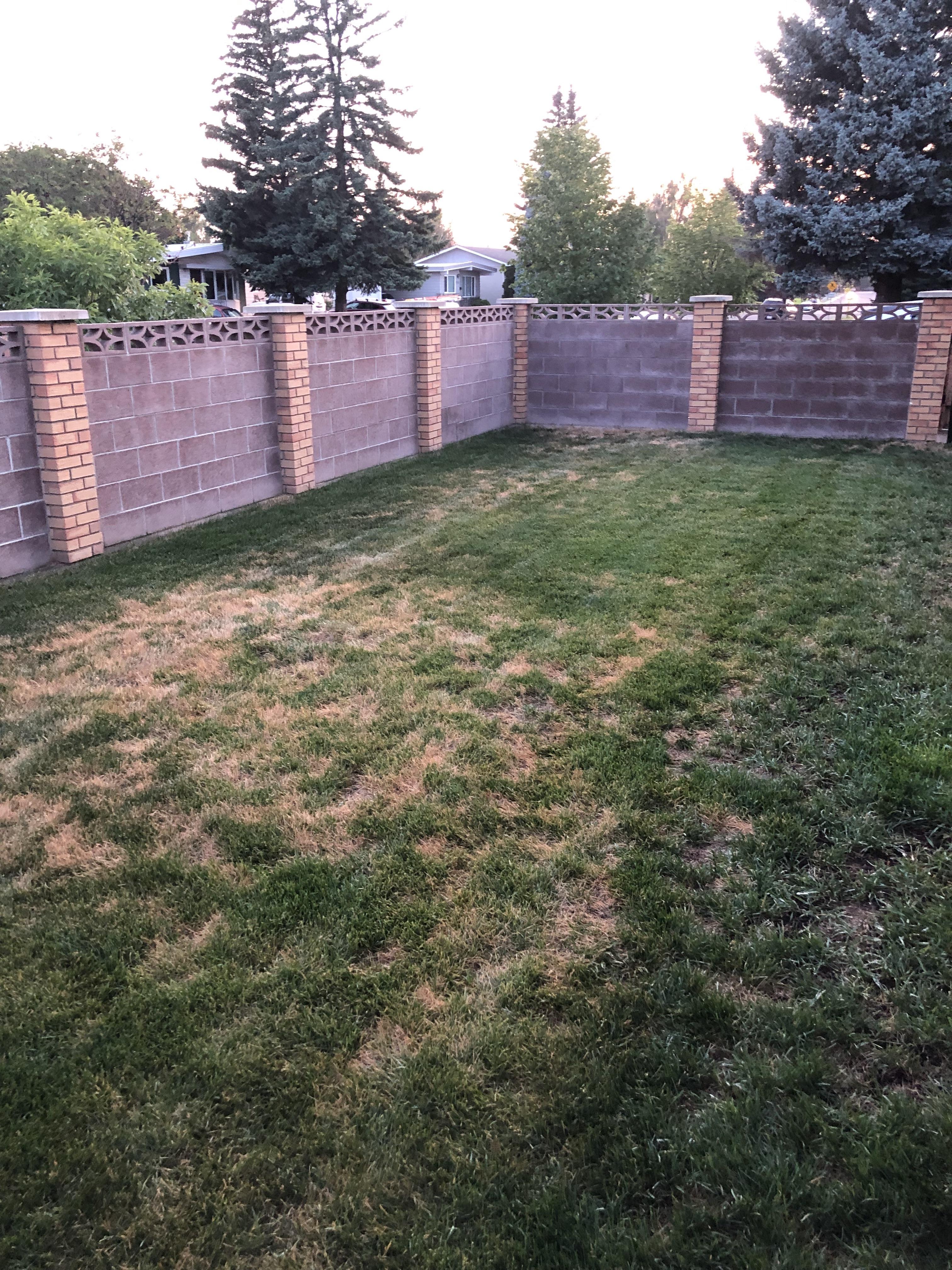 Ryans Lawn Before