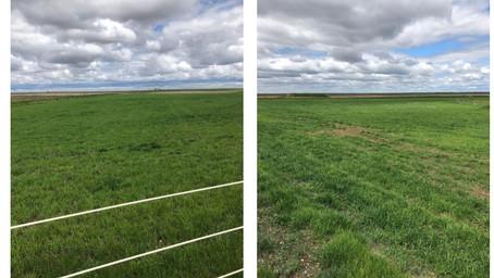 Dry Pasture Application