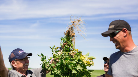 Unlocking Phosphorus in Your Soil