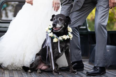 Lori Beneteau Photography wedding photographer Chatham Ontario London