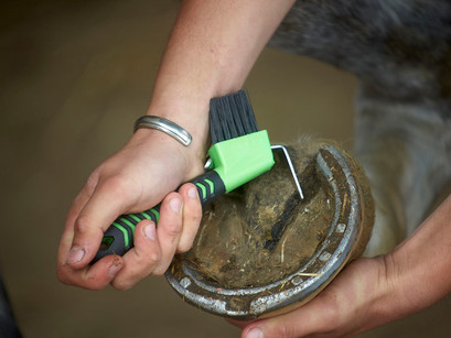 Hoof Thrush: Everything you need to know.
