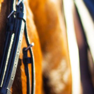 Horse-Part-3.jpg