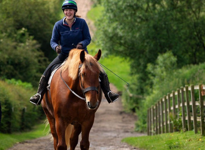 Supporting vulnerable horses - Ernie the Suffolk