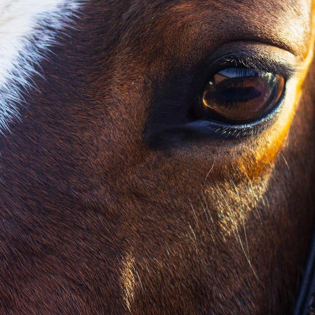 horse-part-2.png