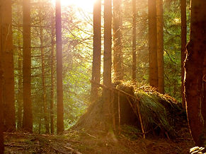 Laubhütte Survival Wald.JPG