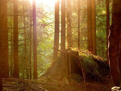 Wildnisschule Natur Wald