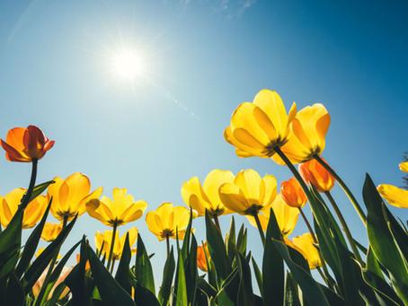 Springing Forward with WIEA