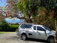 Secure parking under our Coral tree