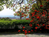 Our Coral Tree with a view of Algoa Bay