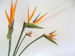 Strelitzia decor in the single partitioned room