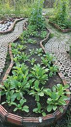 สวนผักเพื่อสุขภาพ