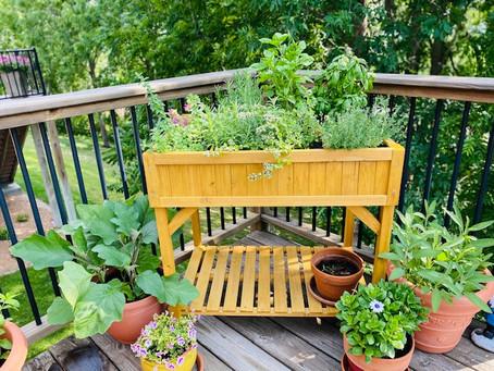 Pesto Genovese on a Warm Summer Day