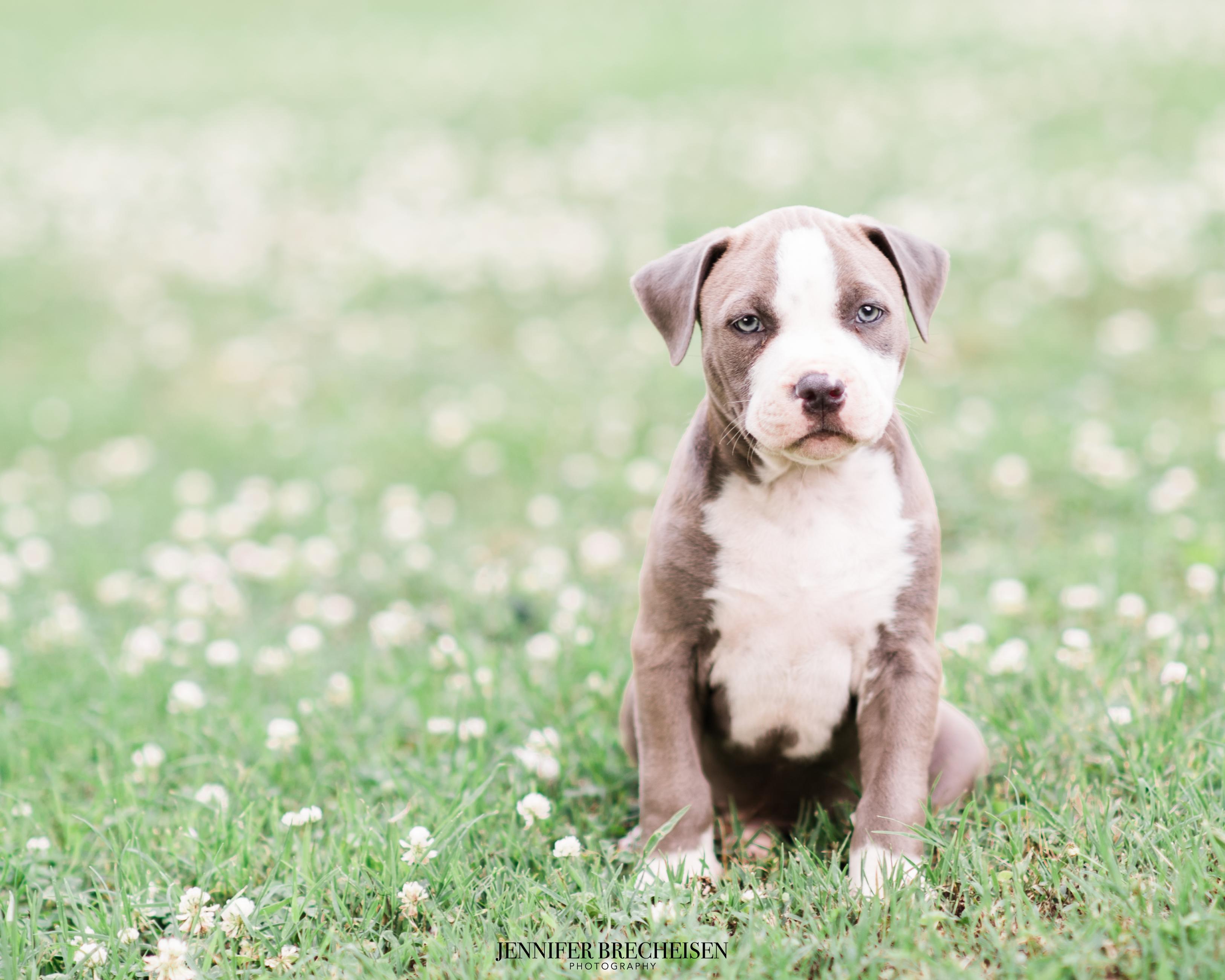 Charlotte, NC Pet Photographers