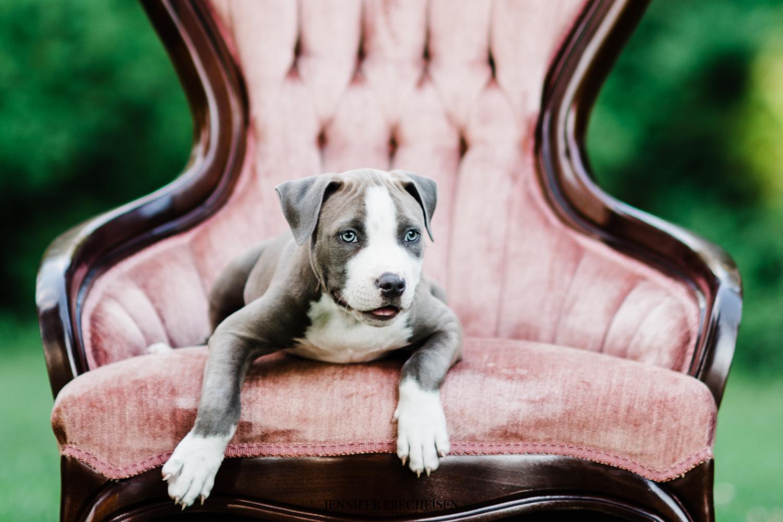 Best Fort Mill, SC Pet Photographers
