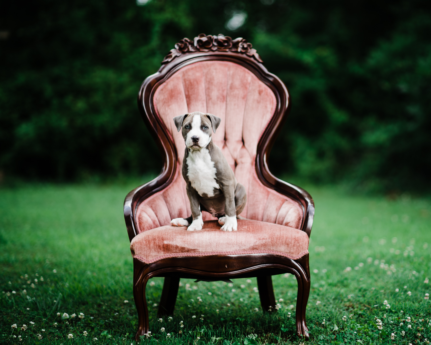 Best Rock Hill, SC Pet Photographers