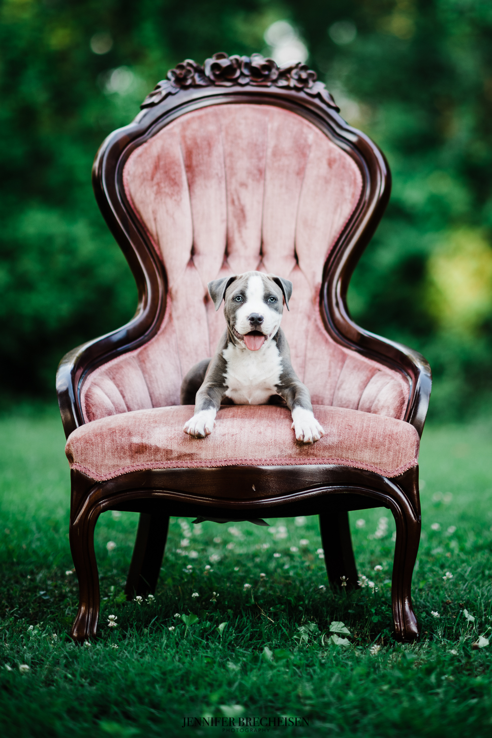 Top Charleston Pet Photography