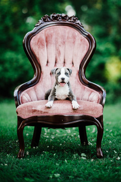 best Lake Wylie Pet Photographers