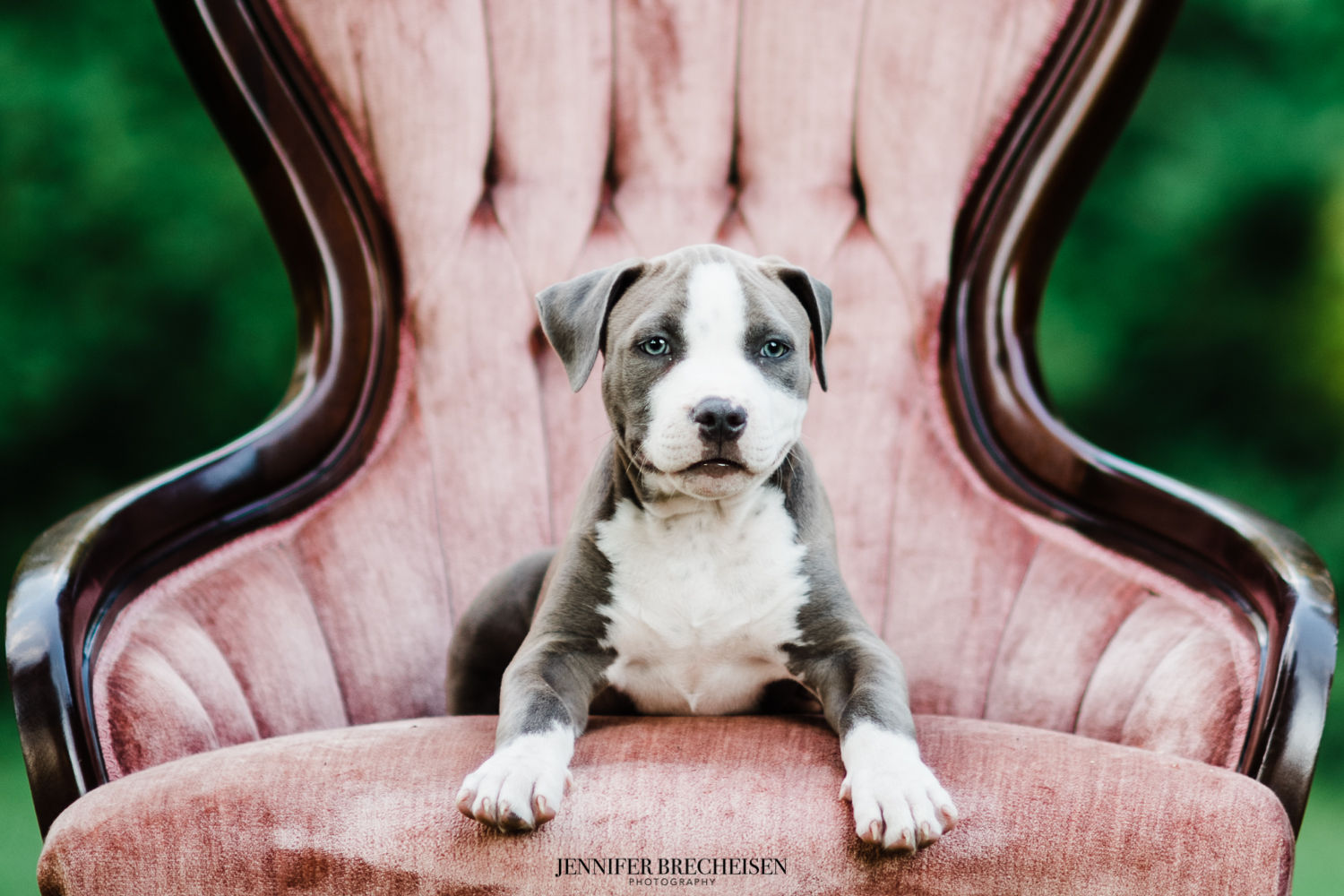BEST CHARLOTTE NC PET PHOTOGRAPHY