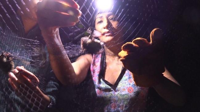 Dra. Osiris Gaona extrae un murciélago de una red de niebla para el monitoreo de sus poblaciones y generar información para su conservación. Osiris lleva más del 20 años trabajando con murciélagos y cuenta con todos los conocimientos para el manejo adecuado de éstas especies.