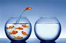 fishbowls - Copy.jpg