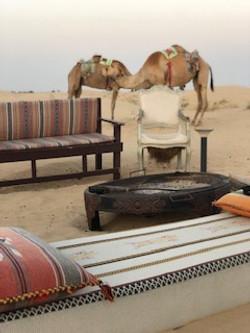 Kamel chillen - Der Abend kommt