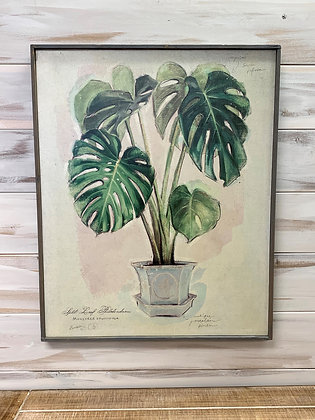 Monstera Frame