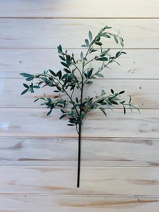 "Olive Branch - 38"""