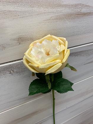 "20"" Creamy Rose"