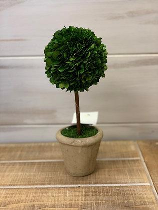 Ball Topiary