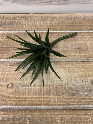 Sword Grass Succulent Stem