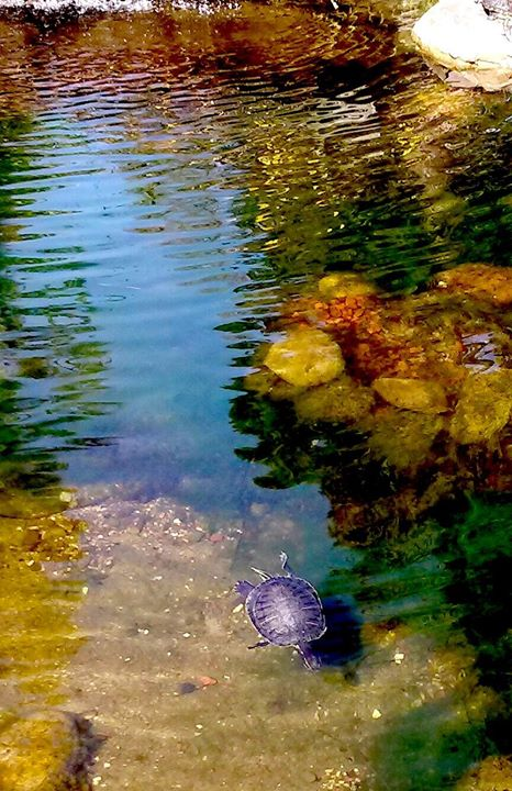 Lake Merritt Garden Center..