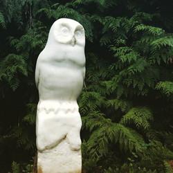 Owl, San Juan Island, WA