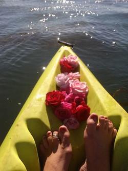 Santa Cruz Roses