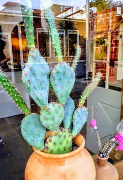 Shop window, Temescal, Oakland, CA