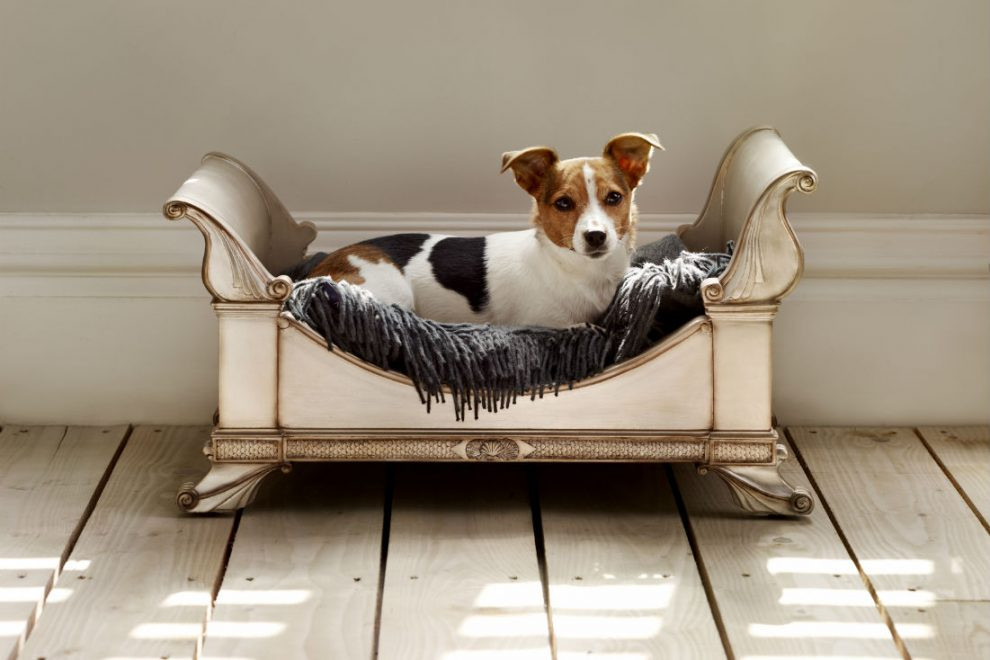 Nautilus Dog Bed by And So To Bed