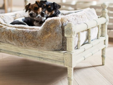 Luxury Furniture for your Pet