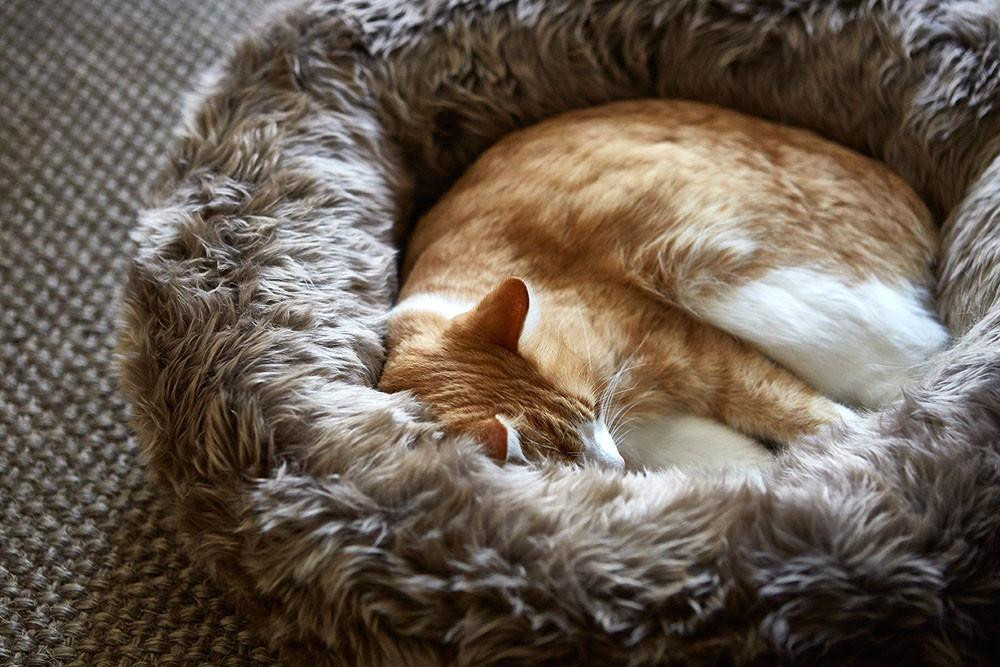 Lana Faux Fur Cat Bed by Style Tails