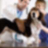 Basset Hound Check-Up