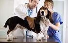 кардиология ветеринарная