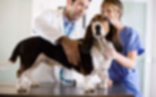 Basset Hound Check-Up