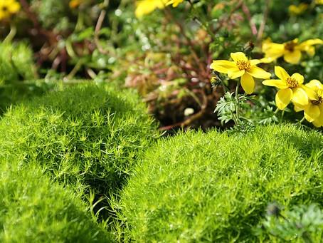 Dicas de manutenção de jardins e áreas verdes