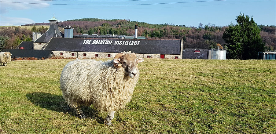 private whisky tour scotland