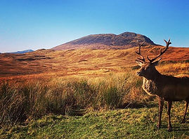 Private bespoke tour of Scottish highlands