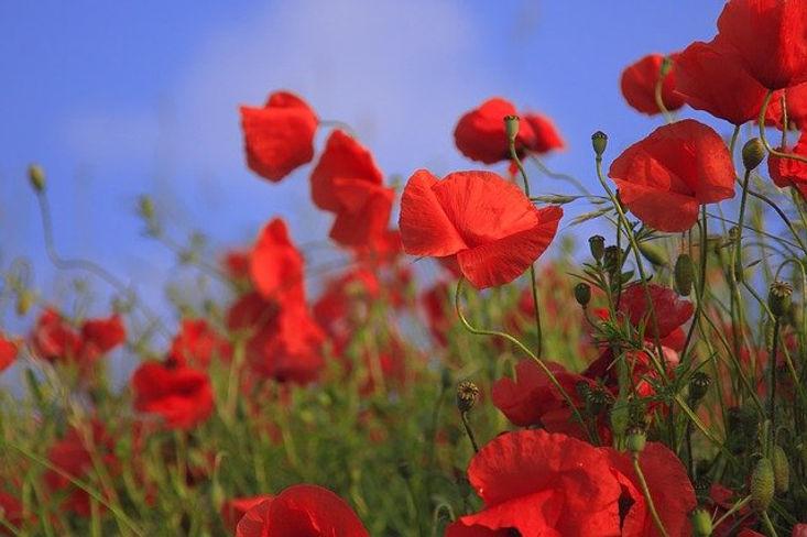 flowers-76358_640.jpg