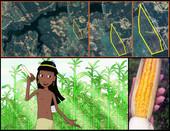 Aldeia Itapicuru adota tecnologias na agricultura para melhorar produção de alimentos orgânicos