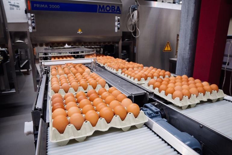 Qualitätskontrolle unserer Eier
