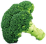 Broccoli_PNG_Picture.png