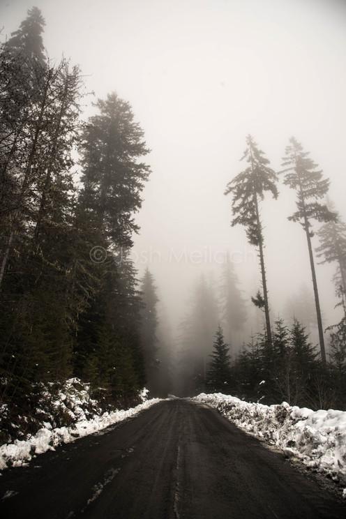 Logging Road, BC