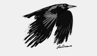 inktober crow.png